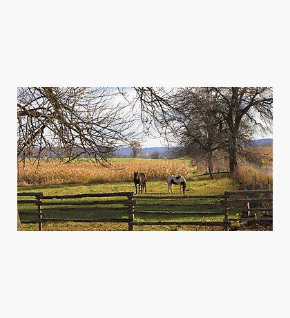 Horses Grazing Photographic Print