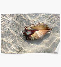 Indonesia 10 - Hermit crab Poster