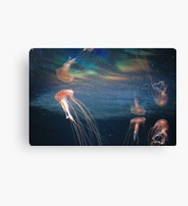 The Berlin Zoo - Jelly Fish Canvas Print