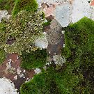Lichen & Moss #1 by Helen Richards