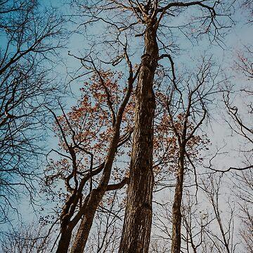 Against a Blue Sky by bareri