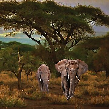 African Elephants by Skyviper