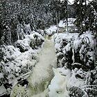 Dorwin Falls von Elfriede Fulda