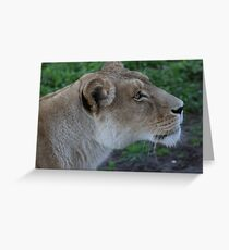 Just Give Me The Food, Don't Make Me Beg. Greeting Card