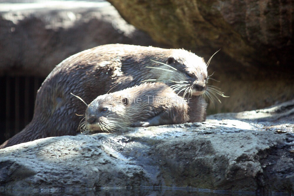 Otters by Debbie Thatcher