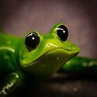 Cute Froggie by Thaddeus Zajdowicz