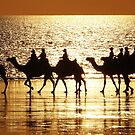 Cable Beach Camels at Sunset - 1 by Colin  Williams Photography
