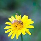 Honeybee Gorging on Gold by TomRaven