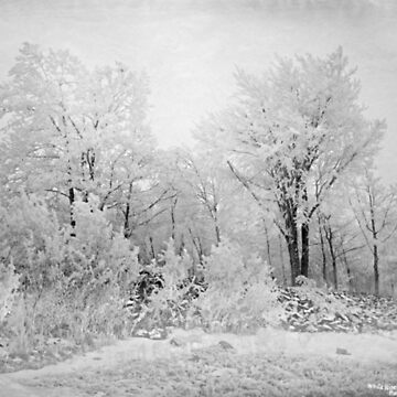 Winter landscape with trees by franceslewis