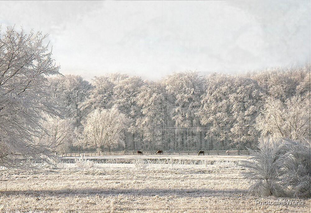 Winter Wonderland by PhotomasWorld