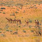 Desert Dwellers by Toddy4x4