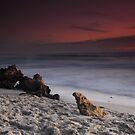 Shore Sentinels by Nico Kenderessy