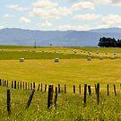 Wairarapa Country by Barbara Caffell