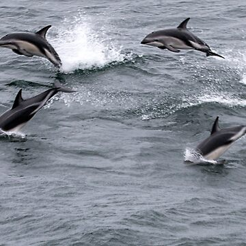 Dolphins playing by MarylouBadeaux