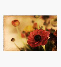brocade Photographic Print