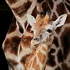 New Baby Boy Giraffe by AnnDixon