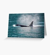 Orca Vaporized Greeting Card
