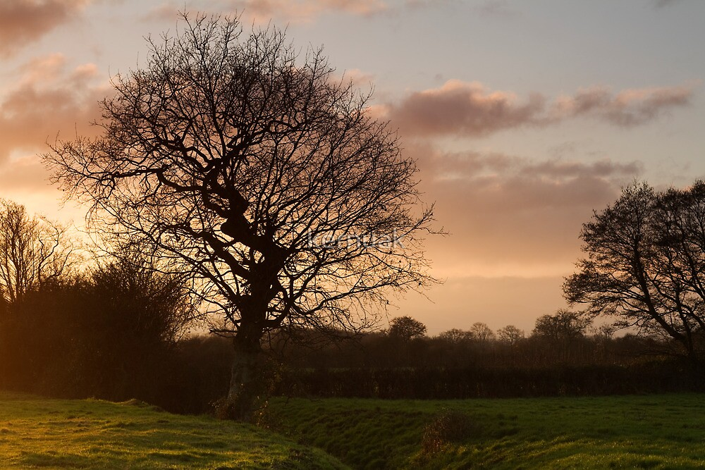 Hamp Brook Tree Silhouette by kernuak
