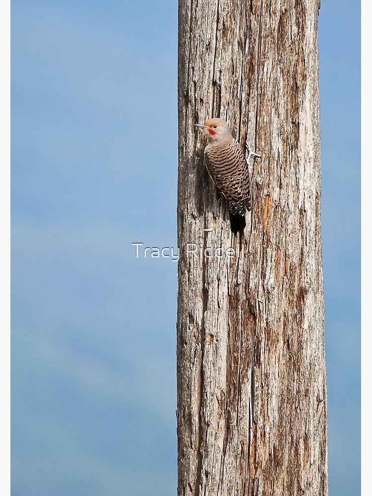 Flicker on a Pole by taos