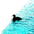 Crested Grebe on blue and white background by derbyshireduck