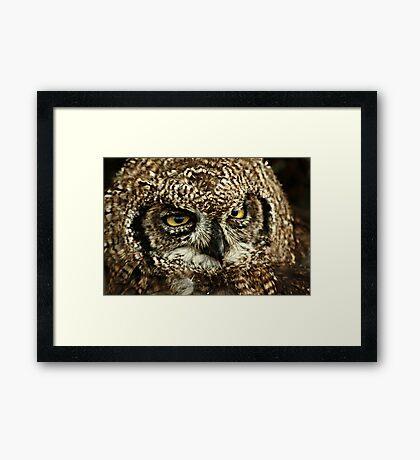 Fluffy Fellow Framed Print