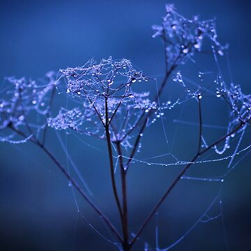 Early Morning Dew Drops by studiopico