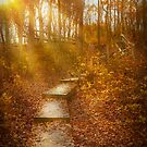 Autumn - The morning hike by Michael Savad
