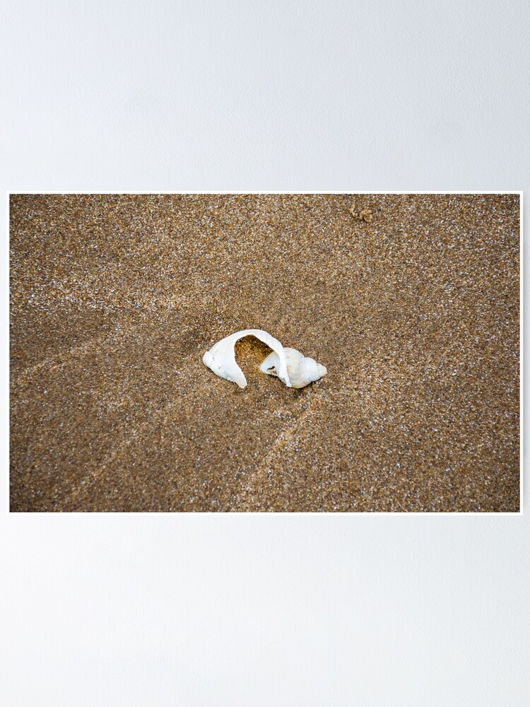 Alternate view of Broken shell on a sandy beach Poster