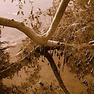 Muddy Mangroves by Martice
