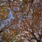 Autumn Canopy by Dave Godden