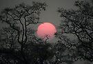 Smoky sunset in Moremi by Neville Jones
