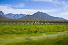 Vinyard with Mountains in the background by RatManDude