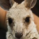 Roo, Baby! by Lawrie McConnell
