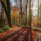 Pathway through an autumnal scene of fallen leaves and ethereal trees by Victoria Ashman