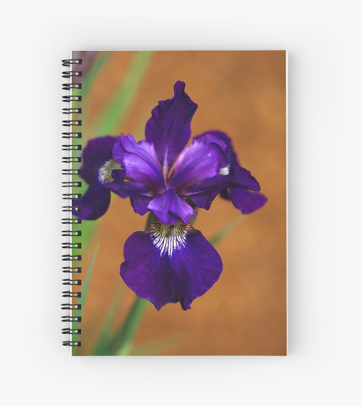 Deep Purple Iris by Deborah  Benoit