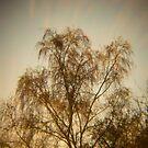 Holga Nature #2 by David Hawkins-Weeks
