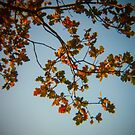 Holga Nature #5 by David Hawkins-Weeks