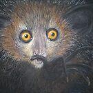 Aye-Aye (Daubentonia madagascariensis)  by elinjohnsen