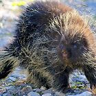 Porcupine by Betsy  Seeton