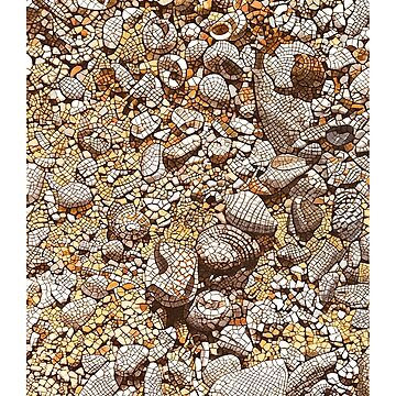 Shells at Anniversary Bay by artkleko