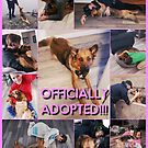 Officially Adopted! by Shulie1