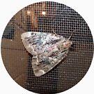 « Papillon de nuit » par Martin Boisvert