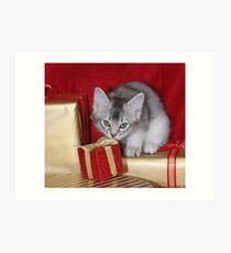 Somali kitten amongst Christmas presents Art Print