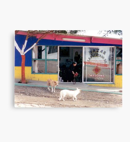 Mexico dogs Canvas Print