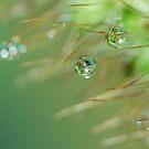 H20 Droplet Macro by Gabrielle  Lees