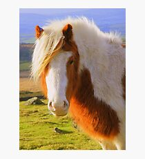 Dartmoor: A Pony with Style Photographic Print