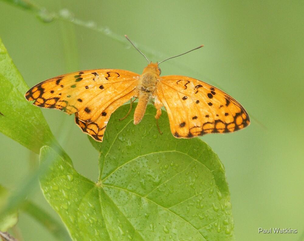 Miscellaneous Butterfly by Paul Watkins