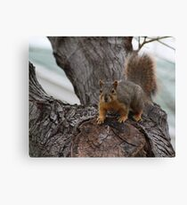 Furry Friend Canvas Print