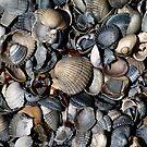 Shells. II by Bluesrose