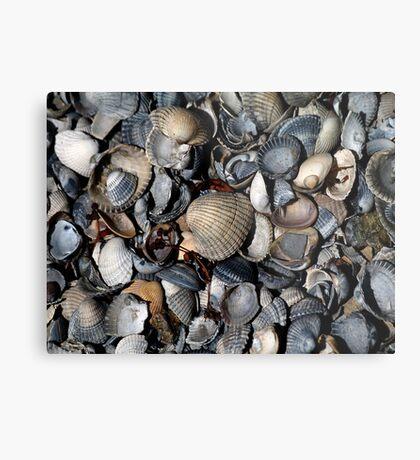 Shells. II Metal Print